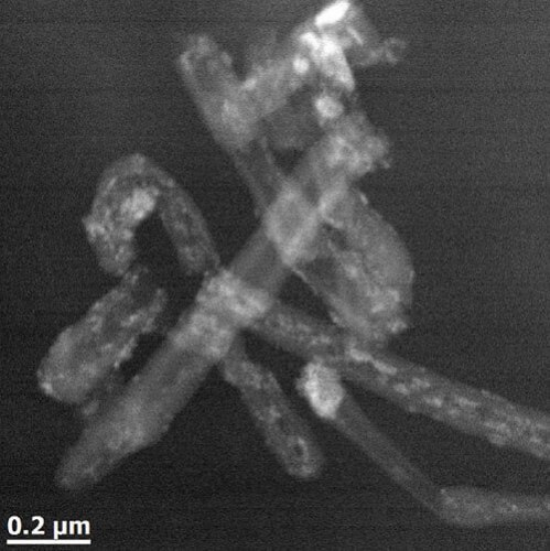 Multi-wall carbon nanotubes filled with iron oxide nanoparticles. Image courtesy Damien Alloyeau; U. Paris, Diderot.