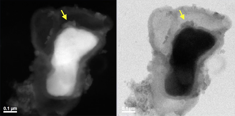 NiAl oxidation via in situ TEM