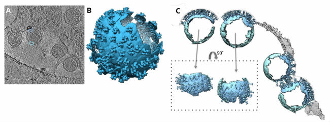 Cryo-EM Application