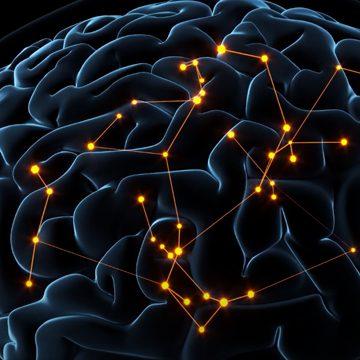 brain connectors